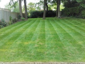 2016_06_10_Dans_First_Stripes copy