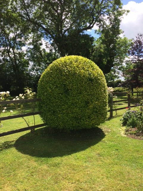 Dave Garden Business Owner Andover Topiary